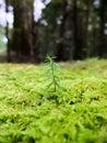 Trees logs ferns sunlight colors mountain nature light green garden Royalty Free Stock Photos