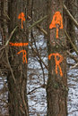 Trees, marked for removal Stock Photography