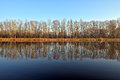 Trees mirroring in calm river leafless waters of elbe Stock Photo