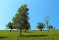 trees on a mountain slope Royalty Free Stock Photo
