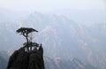 Trees on mountain top Royalty Free Stock Photo