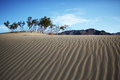 Trees and mountain on top of sand dune Royalty Free Stock Photo