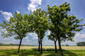 Trees near Jasenovac WWII memorial Royalty Free Stock Photo