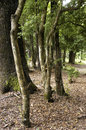 Trees new in the woods Royalty Free Stock Photography