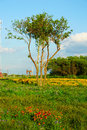 Trees och blommor Arkivfoton