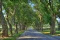 Trees over Shady Lane Royalty Free Stock Photo