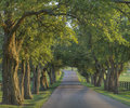 Trees over Shady Lane 2 Royalty Free Stock Photo