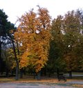 The trees of the park in autumn