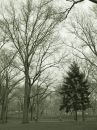 Trees in park in sepia Royalty Free Stock Photo