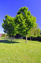 Trees in a park on a very sunny day Royalty Free Stock Photos