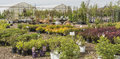 Trees and perennial plants various shrubs for sale are grouped together infront of two greenhouses Stock Image