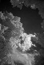 Trees photographed in infrared germany against the background of the sky Royalty Free Stock Images