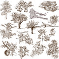 Trees plants and flowers around the world set no white set collection of an hand drawn illustrations description full sized hand Royalty Free Stock Photos