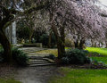 Stromy purpurová kvety cez plytký kroky