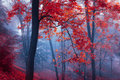Title: Trees with red leaves in blue mist