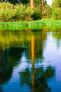 Trees reflect off slough pine and grasses calm river water at Royalty Free Stock Photography