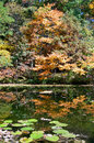 Trees reflected in a pond autumn mood with multicolored Royalty Free Stock Images