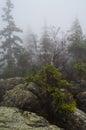 Trees and rocks in błędne skały poland stołowe mountains park narodowy Royalty Free Stock Image