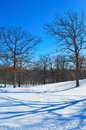 Trees with shadows on snowy lawn a winter scene of casting amazing the snow covered ground Royalty Free Stock Photography