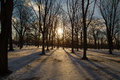 Trees and shadows in the winter with falling snow Royalty Free Stock Photos