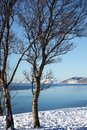 Trees on the shore of the fjord Royalty Free Stock Photo