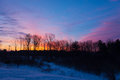 Trees silhouetted against a purple pink orange sunrise dormant in early march and Royalty Free Stock Photo