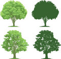 Trees and Silhouettes Royalty Free Stock Photos
