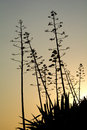 Trees silhouettes at the sunset Stock Image