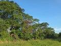 Trees & Sky Royalty Free Stock Photo