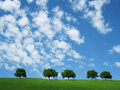 Trees with sky and clouds (6)