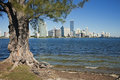 Trees and skyline of Miami Royalty Free Stock Photo
