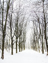 Trees in the snow in beautiful winter forest Royalty Free Stock Photo