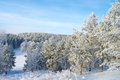 Trees snow covered on the hill Royalty Free Stock Photos