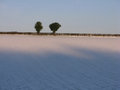 Trees on a snowy horizon pair of against blue sky top of field Royalty Free Stock Photo