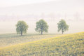 Trees on the spring fields Royalty Free Stock Photo