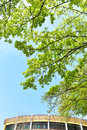 Trees in springtime high with fresh green leaves Stock Images