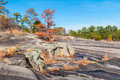 Trees and stone ground in Stone Mountain Park, Georgia, USA Royalty Free Stock Photo