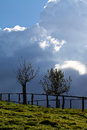 Trees - Storm Clouds Royalty Free Stock Photography