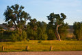 Trees In Summer Along The Yampa River, Deer Lodge Park In Colorado Royalty Free Stock Photo