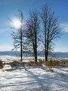 Trees and the sun in High Tatras