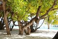 Trees on sun island maldives beach stock photo Royalty Free Stock Photography