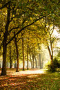 Trees sunlight beautiful autumn day Royalty Free Stock Photos