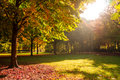 Trees sunlight park autumn Royalty Free Stock Photography