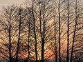 Trees in sunrise colors Royalty Free Stock Photo