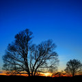 Trees in sunset at valley forge national park big leafless bare tress silhouette against scenic deep blue evening sky with warm Royalty Free Stock Photo