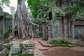 Trees in Ta Prohm, Angkor Wat Royalty Free Stock Image