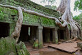 Trees in Ta Prohm, Angkor Wat Stock Photo
