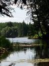 Through the trees Royalty Free Stock Photo