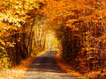 Trees tunnel and road Royalty Free Stock Photo