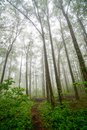 Trees Under the Fog Royalty Free Stock Photo